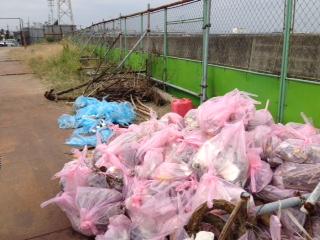 三番瀬 ゴミの山.JPG