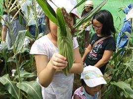 農業体験2013-2圧縮あ.jpg