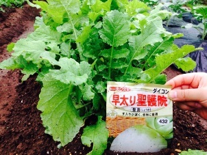 ふれあい農園 1010 3.jpg