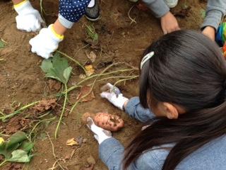 2015 収穫祭.JPG